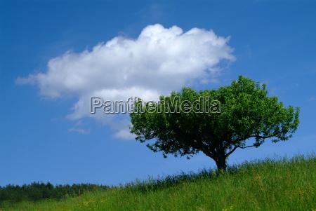albero con cielo 2