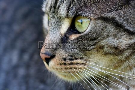 animale mammifero lingua orecchie guardare osservare