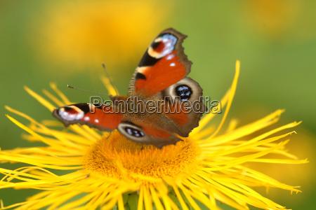 farfalla sul fiore 9