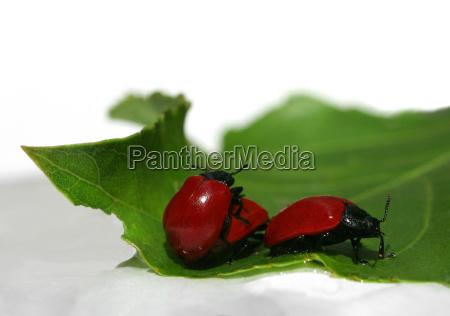 verde scarafaggio riproduzione voglia di primavera