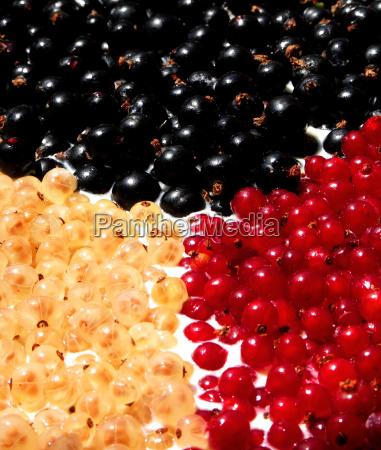 nero frutta arbusto ribes tingere colori