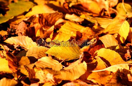 luce foglia foglie colorato caduta giallo