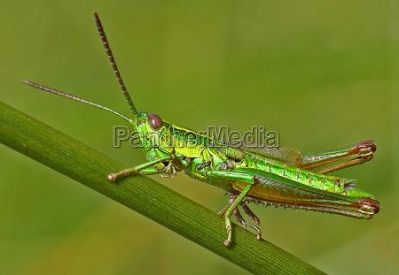 primo piano close up insetto insetti