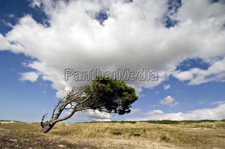 blu albero collina orizzonte verde romantico