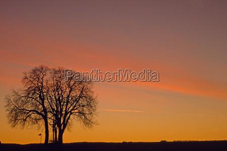 albero alberi inverno tramonto sera cielo