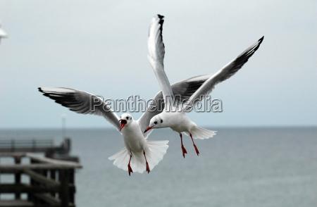 ala acqua mar baltico acqua salata