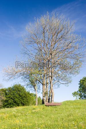 blu albero piantare seminare verde fiore