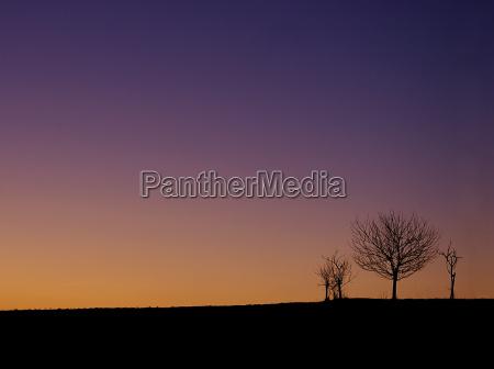 albero alberi inverno tramonto cielo firmamento