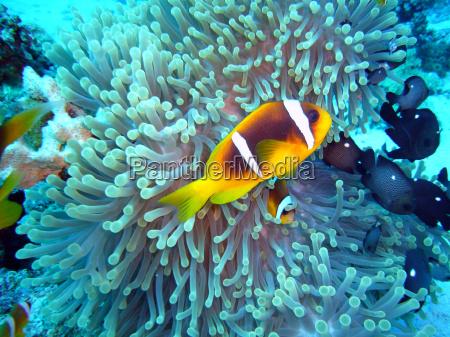 pesce sottacqua acqua salata acqua immergersi