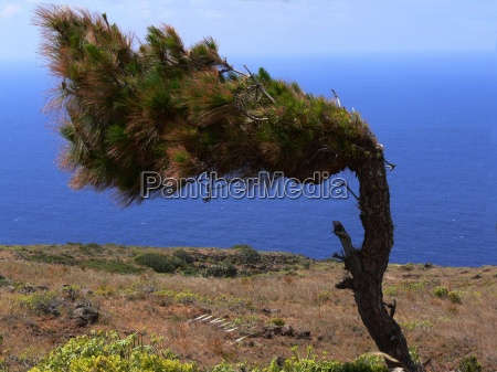 albero vacanza vacanze pino quiete silenzio