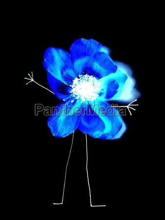 blu giardino piantare seminare fiore fioritura
