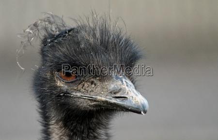 animale uccello animali uccelli zoo guardare