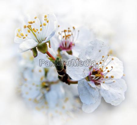 esistere sensazione sentimento fioritura fiori primavera