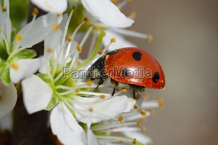 insetto fiore verde fioritura scarafaggio primavera
