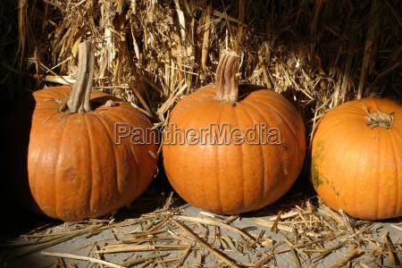 agricoltura frutta deco colori dautunno halloween