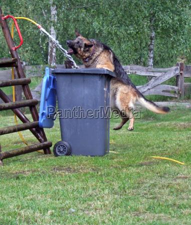 giardino animale domestico denti pelliccia cane