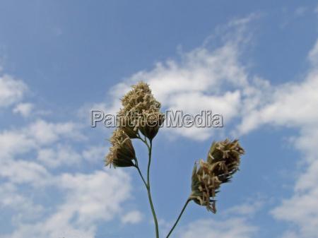 fiore nuvola secco asciutto arido cielo