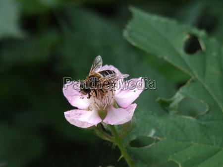 foglia primo piano close up fiore