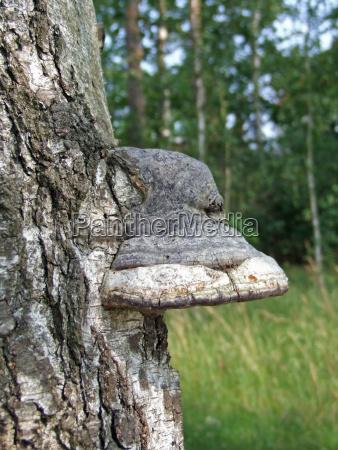 il fungo sullalbero
