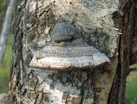 albero legno tronco conservazione della natura