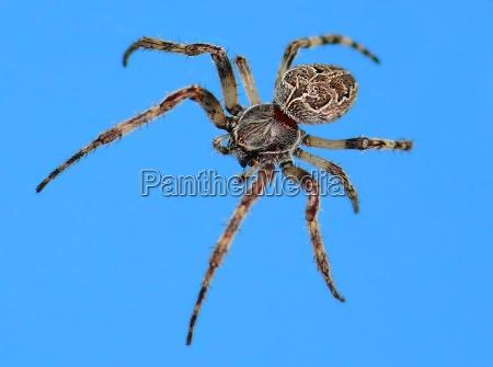 ragno a disegni a motivi modello