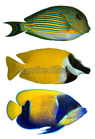 animale animale domestico acquario pesce hobby