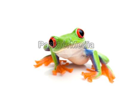 rana in cerca fotocamera