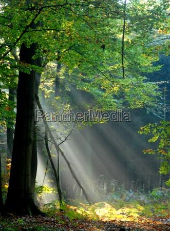 fasci di luce versano attraverso gli