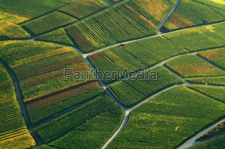 weinbaulandschaft vista aerea