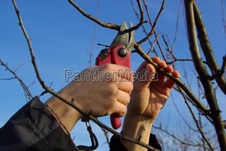albero ramo taglio forbici forbice tagliare