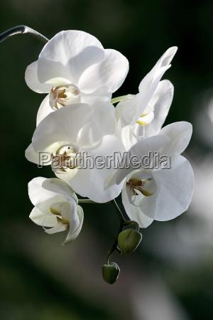 pianta decorativa picciuolo picciolo gambo pianta