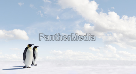 animale pinguino natura antartide