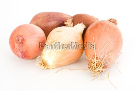 cibo cinque verdura cipolla scalogno isolato