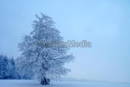 albero inverno ghiaccio paesaggio invernale neve