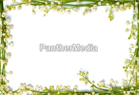 giglio della cornice del fiore della