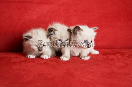 three little kittens