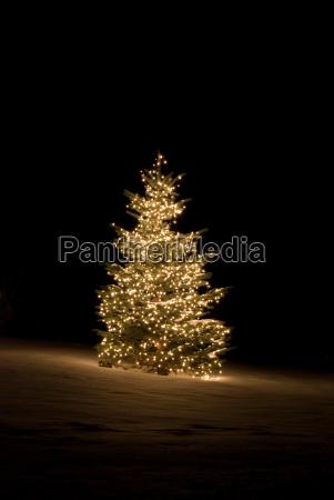 albero inverno luci fuori natale al