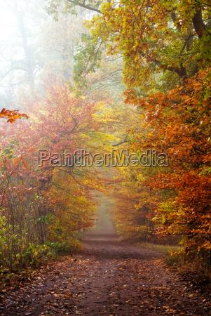 autunno foresta