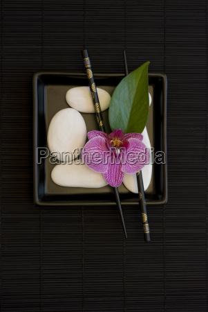 foglia fiore asia nero ciottolo orchidea