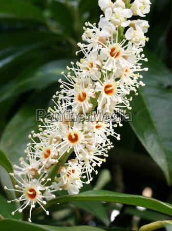 lauroceraso bloom