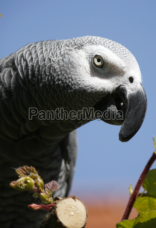 blu albero uccello uccelli ramo sguardo