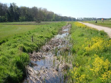 colza primavera golfo fiume acqua mecklenburgvorpommern