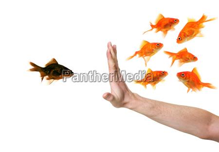 pesce concorrenza pesce rosso razzismo sleale
