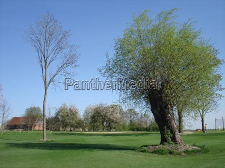 verde golfo golfista mecklenburgvorpommern kaschow golfclub
