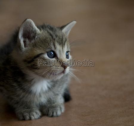 bambino del gatto