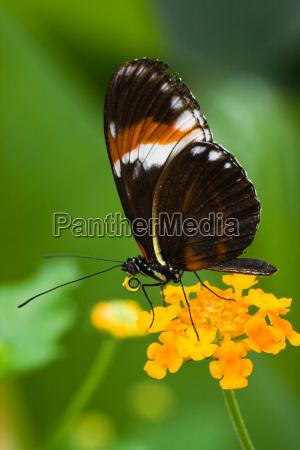 animale insetto insetti farfalla animali tropicale