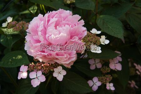 parco giardino fiore fioritura fiori estate