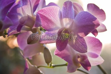 fiore fiori porpora tropicale orchidea