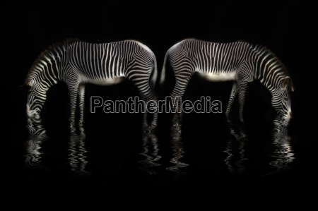 acqua potabile zebra