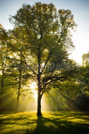 albero in controluce